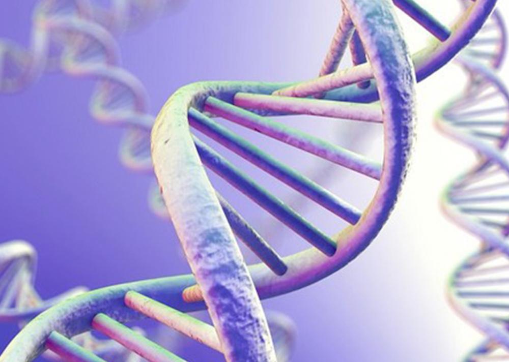 đùi to do di truyền