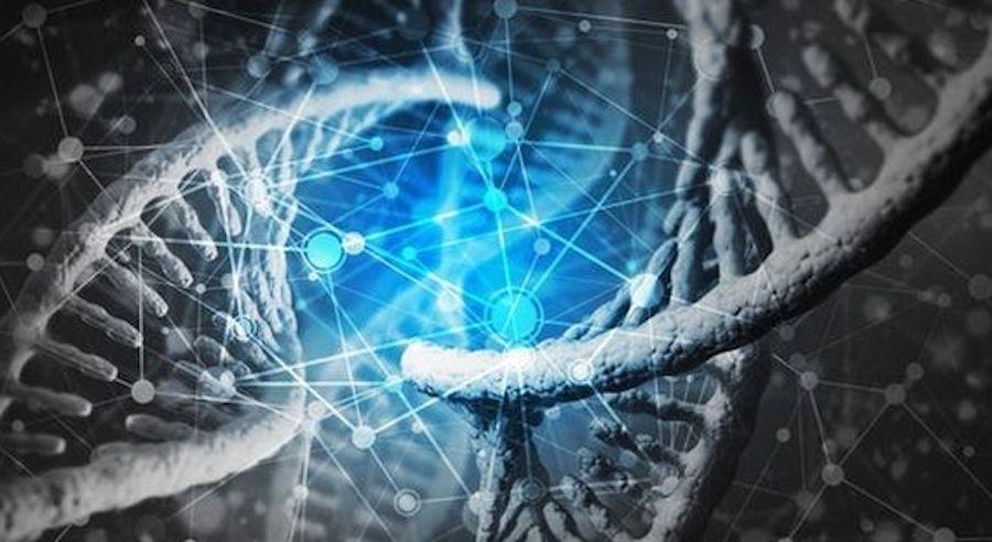 bắp tay to do gen di truyền
