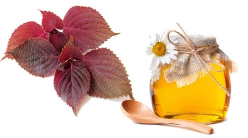 lá tía tô và mật ong